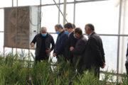 بازدید وزیر جهاد کشاورزی از گلخانه هواپیمایی ماهان در ارزوئیه بافت