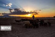 توانمندسازی روستاییان کرمان با ایجاد هشت هزار و ۷۰۰ شغل پایدار